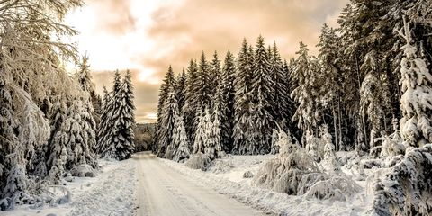 Snow, Winter, Sky, Tree, Nature, Natural landscape, Freezing, Cloud, Frost, Light,