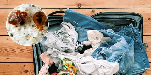 bedbugs dirty laundry suitcase
