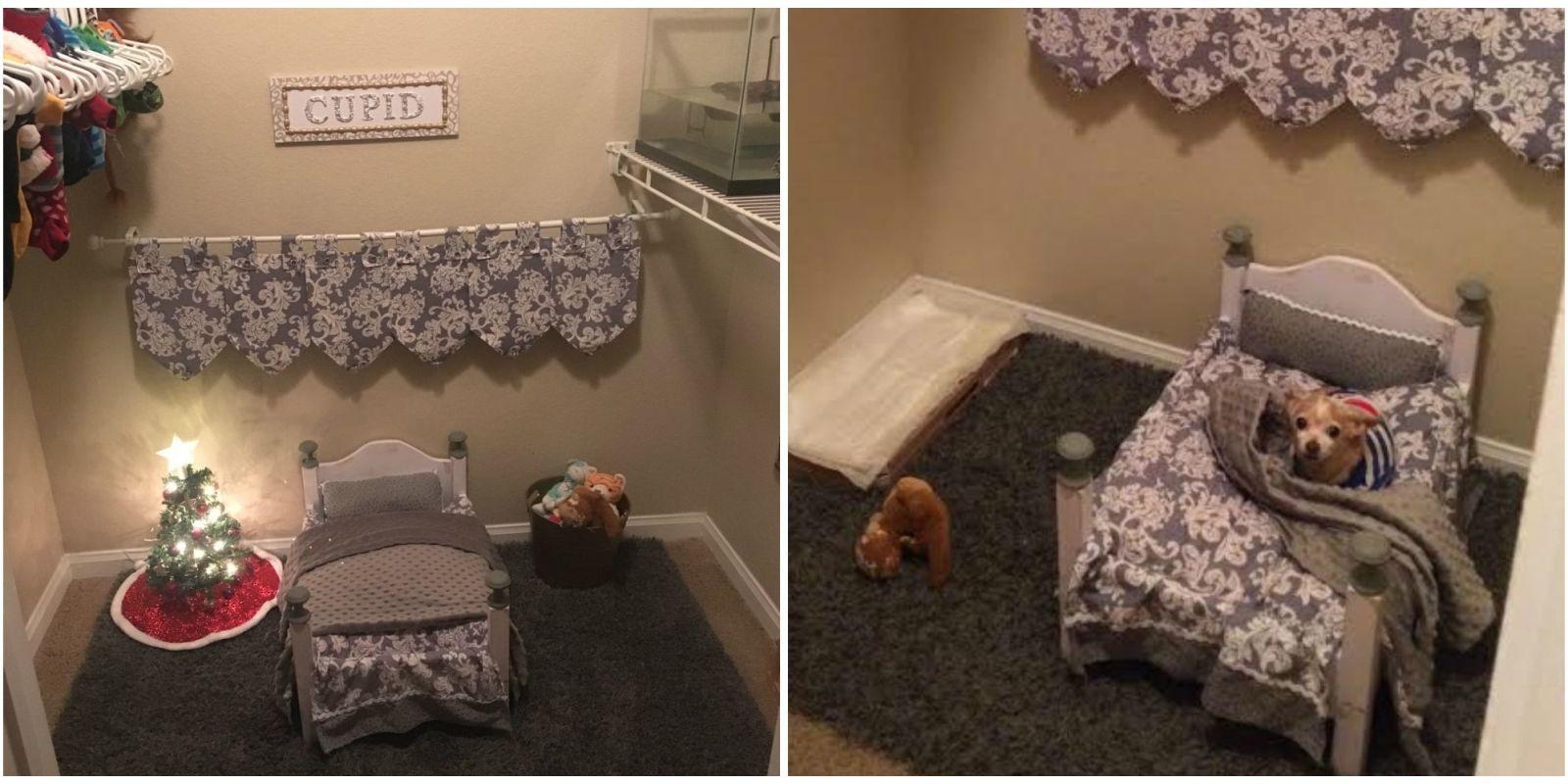 Genial Dog Bedroom