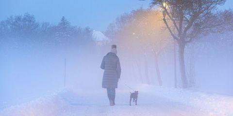 Snow, Winter, Atmospheric phenomenon, Sky, Freezing, Fog, Blizzard, Mist, Morning, Winter storm,