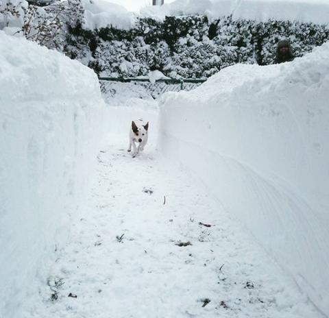 Snow, Geological phenomenon, Winter, Freezing, Blizzard, Slope, Canidae, Glacial landform, Winter storm, Ice cap,