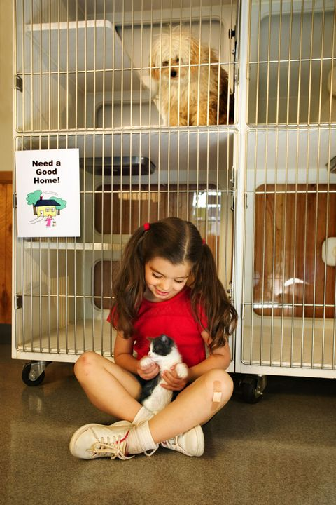 Animal shelter, Companion dog, Child, Fawn, Cat, Canidae, Cage, Play,