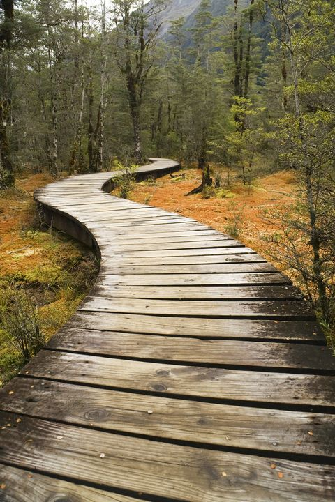 Natural landscape, Nature, Boardwalk, Natural environment, Tree, Walkway, Path, Nature reserve, Wilderness, Forest,