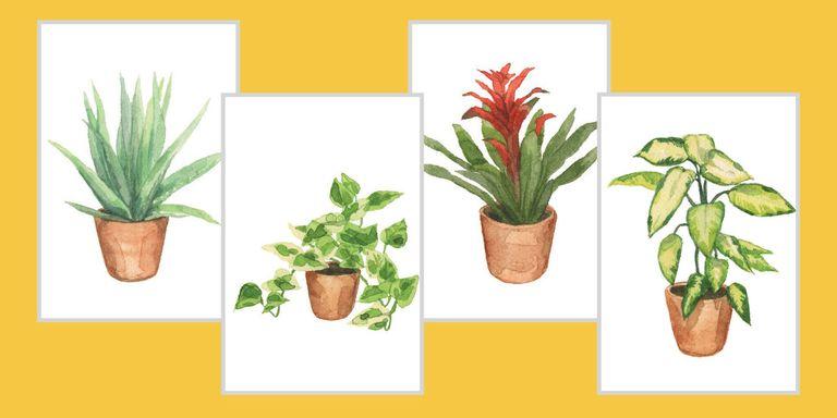 hard to kill houseplants - House Plants