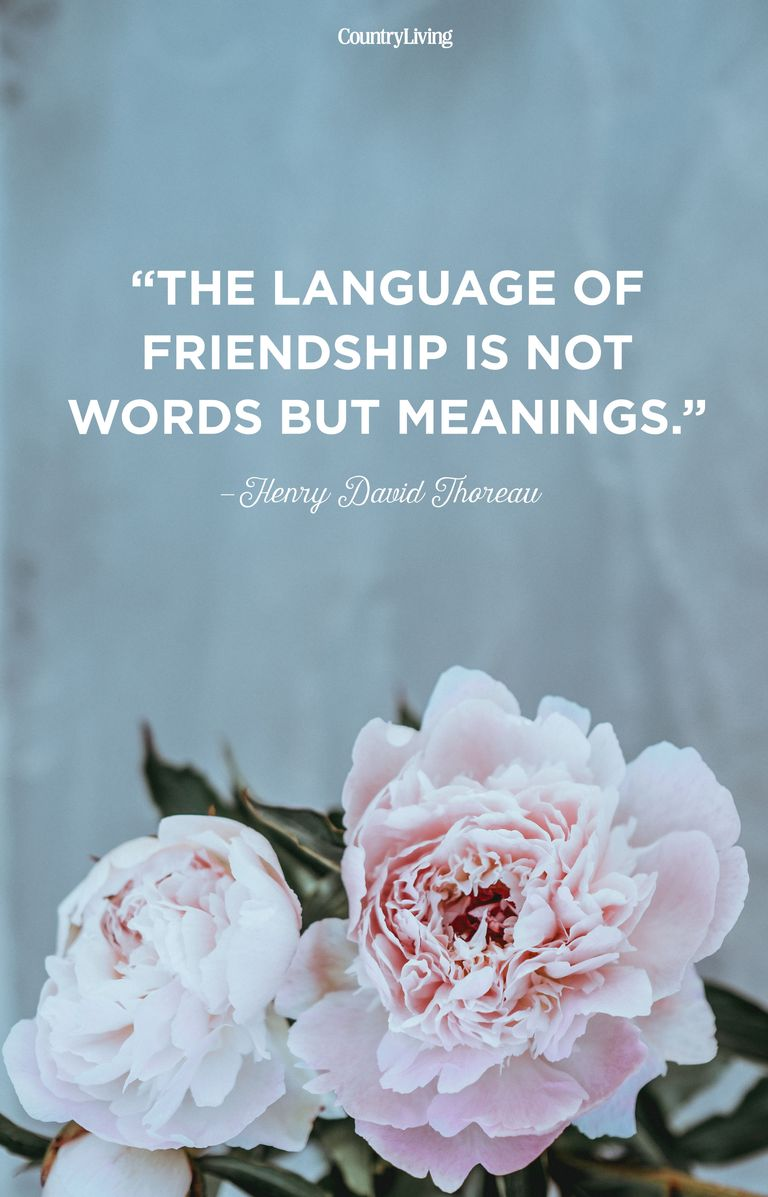 10 Friendship Quotes - Funny Quotes About Friendship