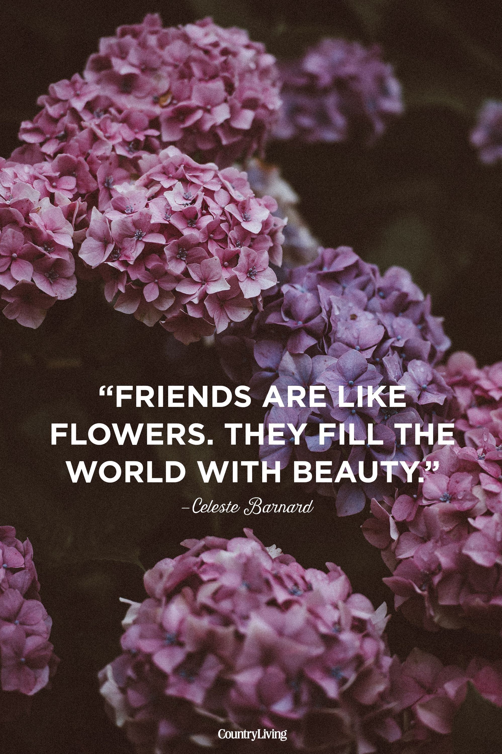 10 cute friendship quotes short sayings about friendship izmirmasajfo