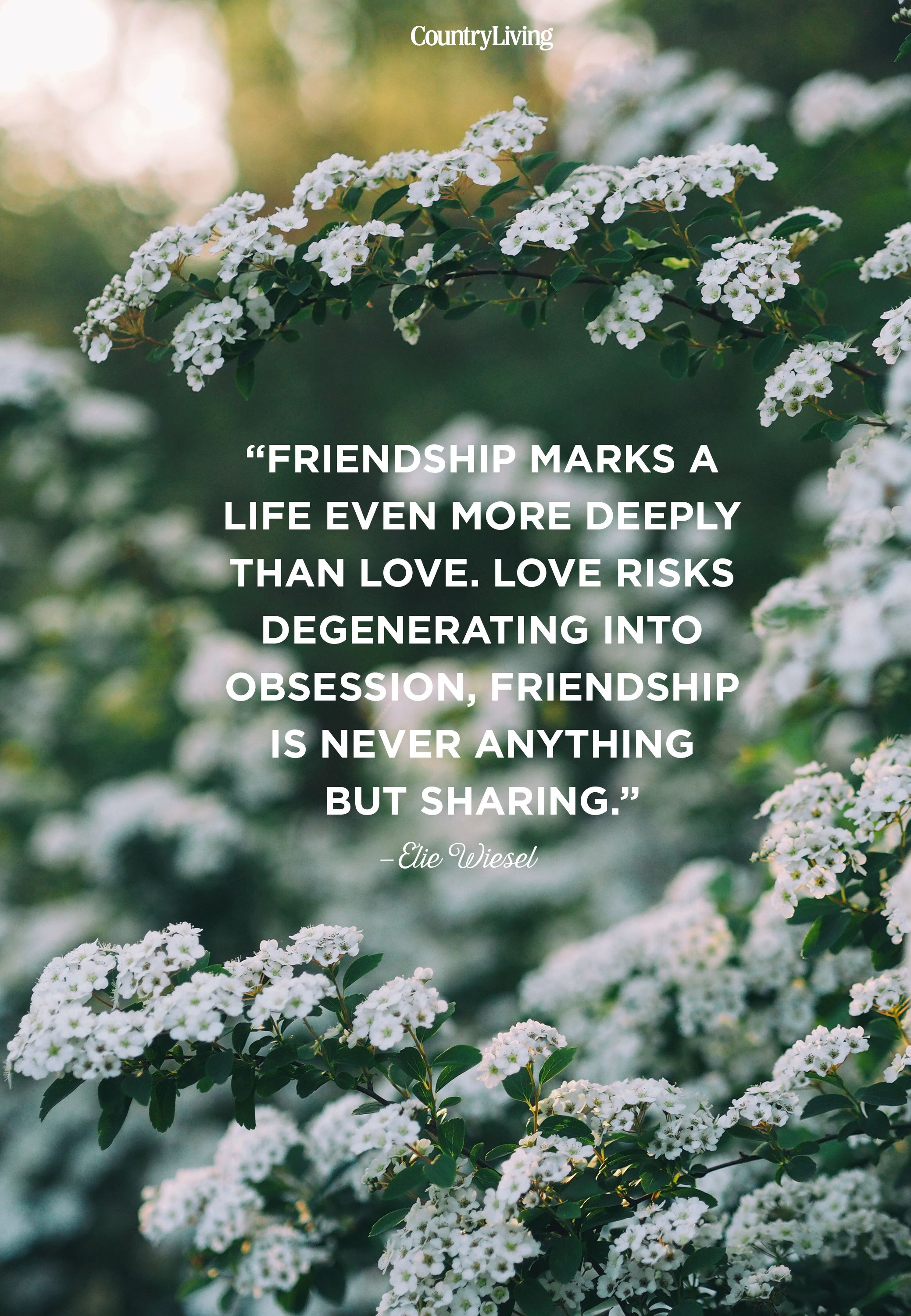 10 Cute Friendship Quotes - Short Sayings About Friendship