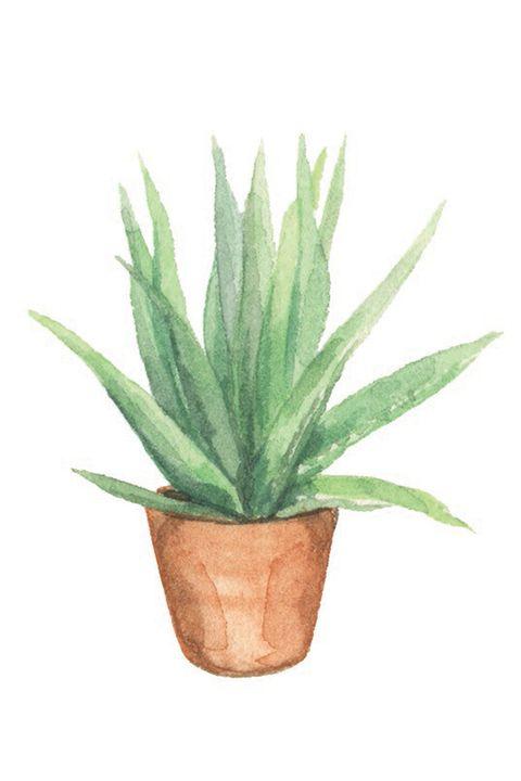 Flowerpot, Plant, Houseplant, Flower, Agave, Terrestrial plant, Aloe, Leaf, Flowering plant, Succulent plant,