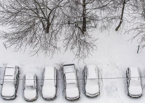 White, Photograph, Footwear, Black-and-white, Snow, Winter, Monochrome, Freezing, Tree, Font,