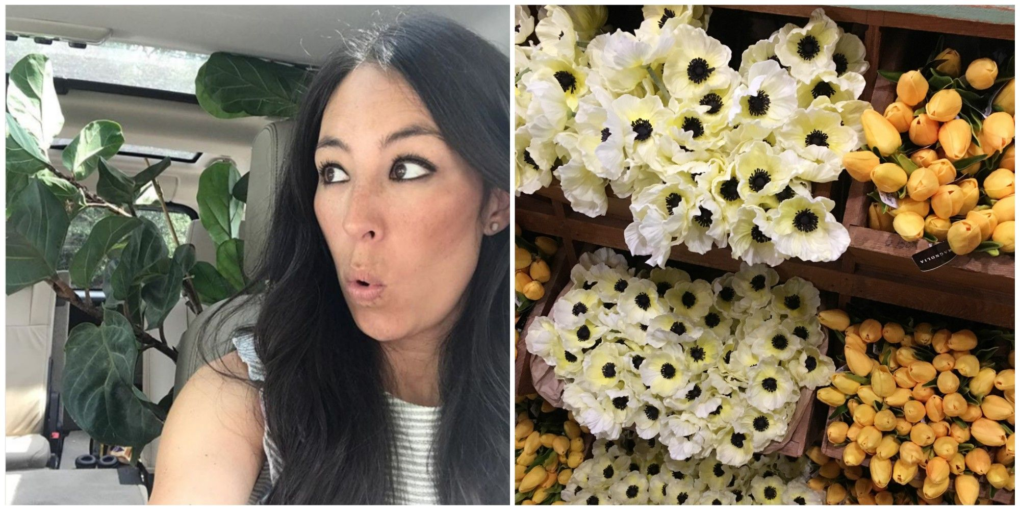 Does Joanna Gaines Use Fake Flowers And Plants Joanna Gaines