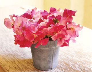 pink sweet pea bouquet