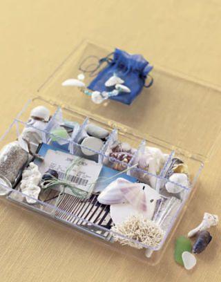 beach box shells
