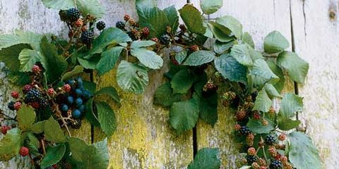 a fresh wreath made of vines leaves and summer berries
