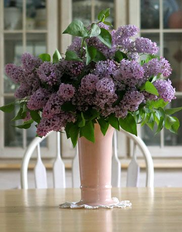 My Lilacs Wont Last