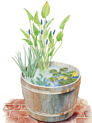 A Whiskey Barrel Water Garden