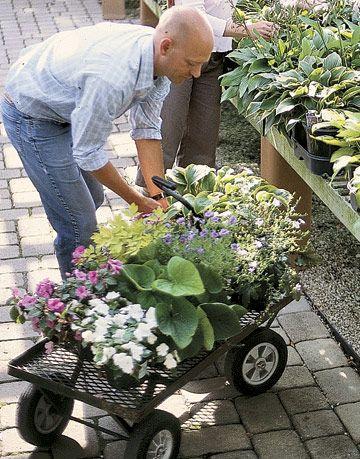 man choosing plants in a nursery