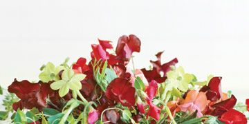 bouquet of red sweet peas flowers