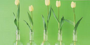 yellow tulips in vases