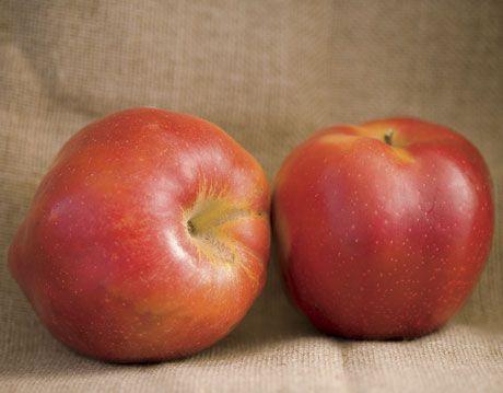 spokane beauty apple