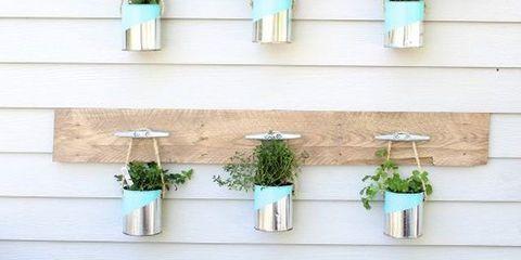 Plant, Flowerpot, Wall, Interior design, Houseplant, Herb, Artifact, Plant stem, Vase, Annual plant,
