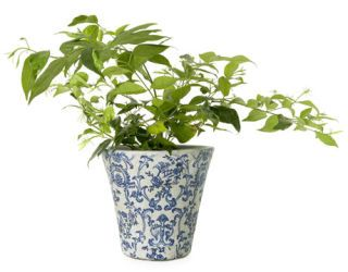 white pot with blue pattern
