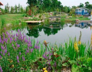 natural swimming pool, swimming pond, by bionova from whole water systems