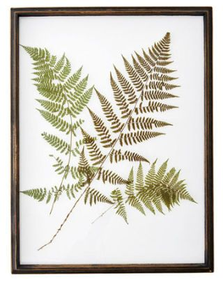 Country Cottage Chic Country Home Decor Rustic Botanical Art Rare Antique Fern Print Rigid Three Branched Polypody Fern 1889276