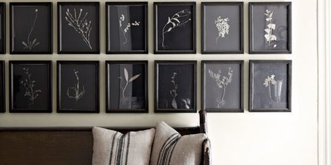 wall of framed wildflowers