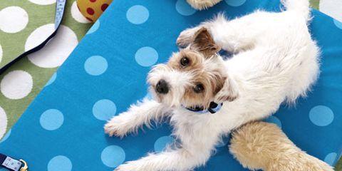dog with polka dot dog accessories