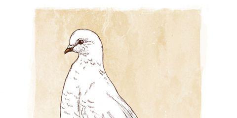 Bird, White, Beak, Wing, Art, Feather, Beige, Illustration, Drawing, Poster,