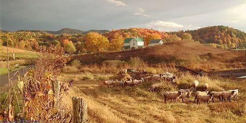 Natural landscape, Cloud, Landscape, Grazing, Grassland, Rural area, Plain, Hill, Pasture, Prairie,