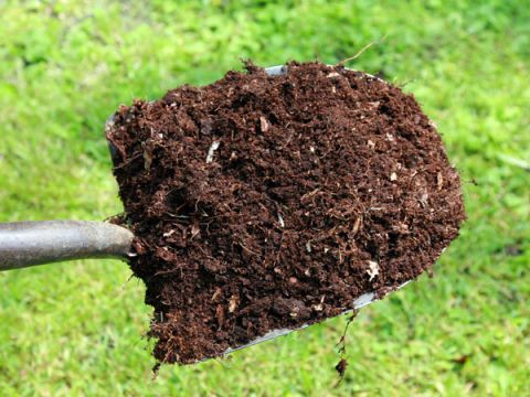 Add Compost and Newspaper