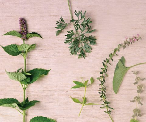 various herbs displayed on a wood background