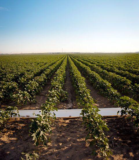Agriculture, Plant, Farm, Field, Plantation, Horizon, Plain, Soil, Land lot, Crop,