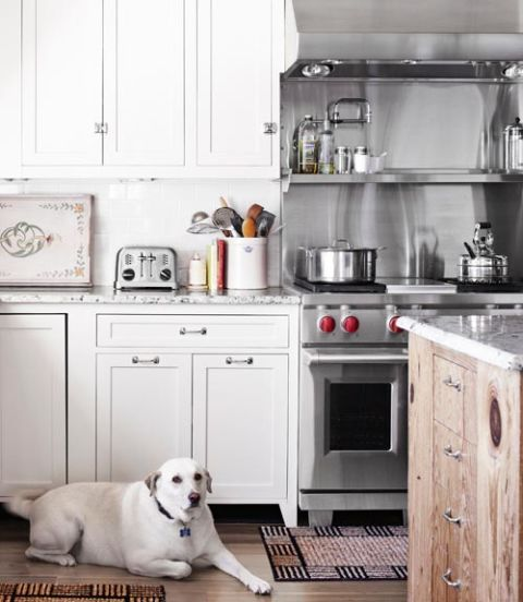 Exceptionnel White Kitchen With White Dog On The Floor
