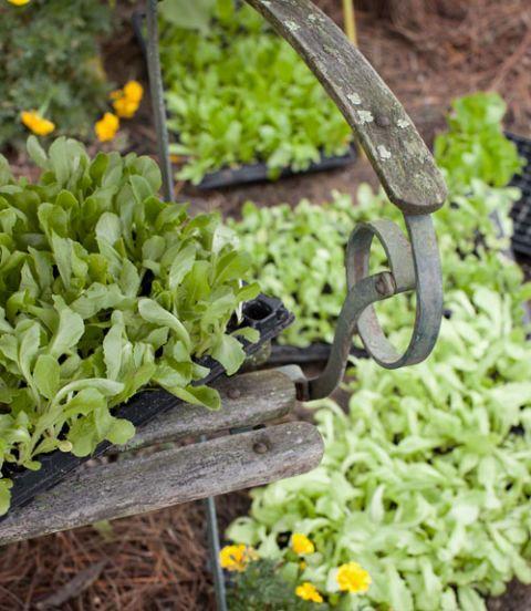 Vegetable Garden Tips - Kitchen Garden Ideas