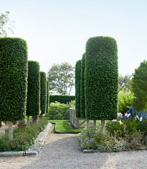 landscaping tips from sean conway garden design ideas - Garden Design Trees
