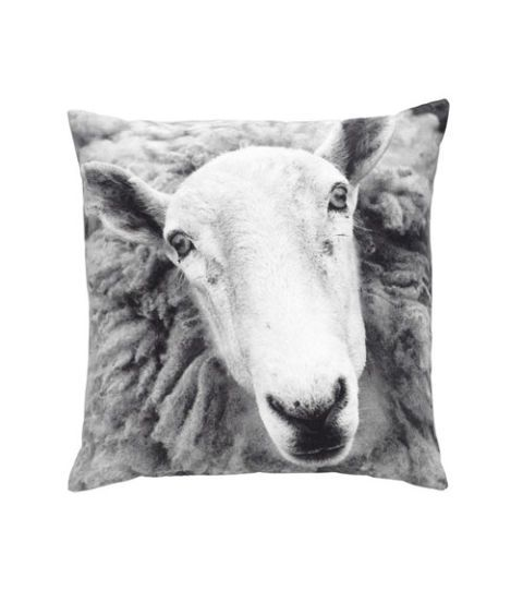 White, Style, Monochrome photography, Terrestrial animal, Grey, Working animal, Monochrome, Black-and-white, Pack animal, Linens,