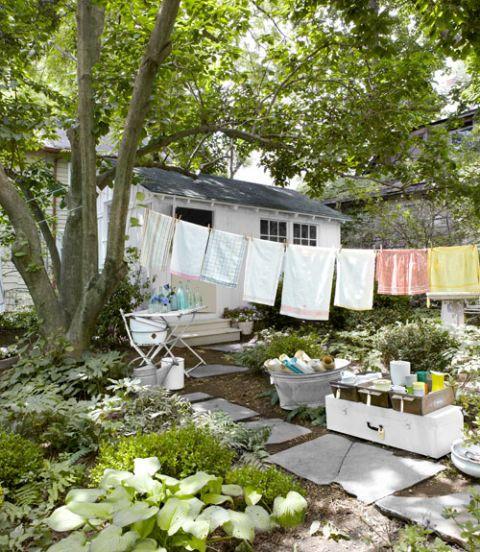 Plant, Leaf, Rural area, Groundcover, Garden, Trunk, Backyard, Shade, Herb, Yard,