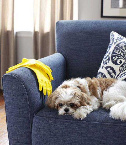 clean dog hair off a chair with a rubber glove