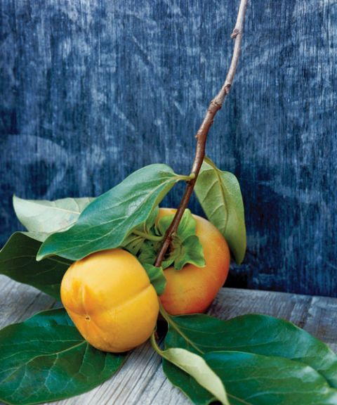 branch with two persimmons