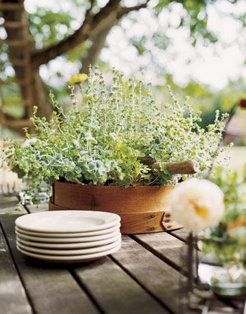 leafy green herbs growing in a wooden container on a table with stack of white plates