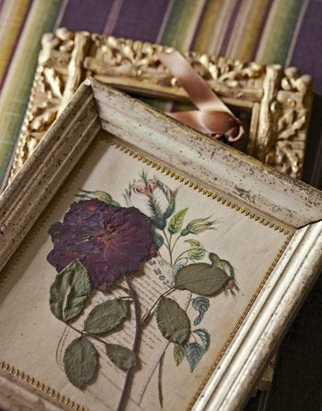 pressed flower in frame