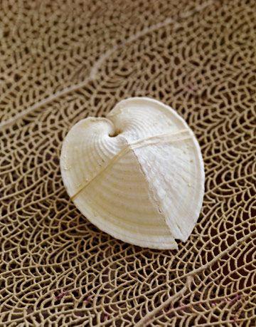 shell on a sea fan