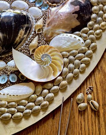 shells in decorative pattern