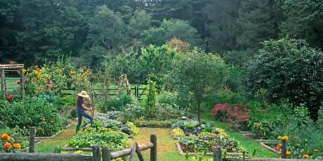 organic kitchen garden kitchen garden organic herb kitchen gardening 1227