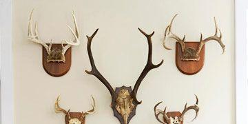deer antlers on wall