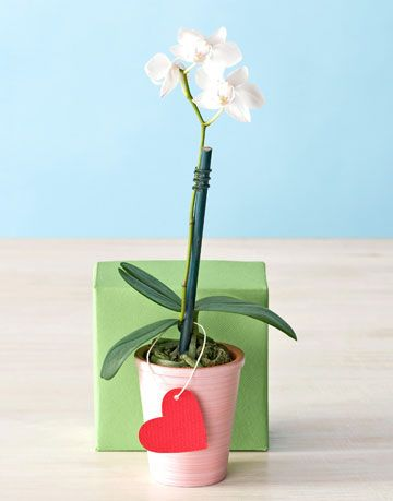 orchid in container