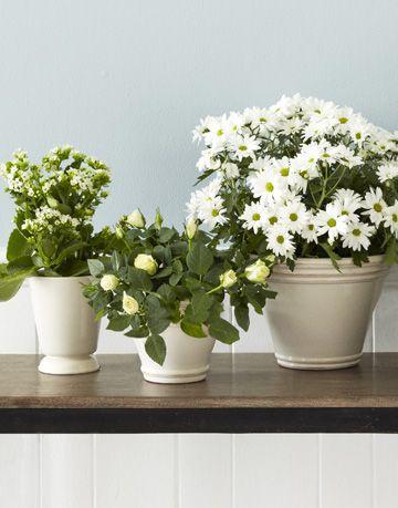 Cheap white flower arrangements tips for white diy flower arrangements image mightylinksfo