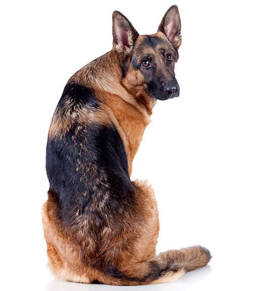 sc 1 st  Country Living Magazine & Dog Health Questions - Dog Advice from a Vet